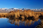 Farminton bay Utah bird refuge — Stock Photo