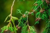 Floresta de primavera — Fotografia Stock