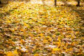 Beautiful autumnal forest — Stockfoto