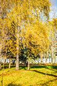 Güzel sonbahar orman — Stok fotoğraf