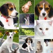 Collage of different cute pets — Stock Photo #53554409