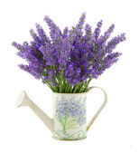 Watering can with lavender — Foto Stock