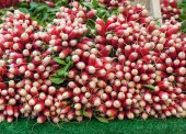 Stall of radishes — Stock Photo
