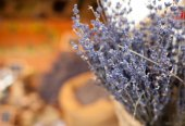 Lavender bunches selling in a outdoor market — Stock Photo