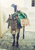 Donkey in Santorini — Stock Photo