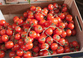 Sicilian box of bunches cherry tomatoes — Stock Photo