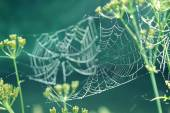 Gentle naturalistic background with spider web with dew. — Stock Photo
