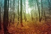 Таинственный лес. — Стоковое фото