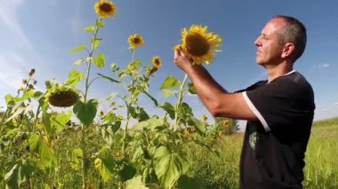 Agriculturist Checking His Sunflowers — Stockvideo