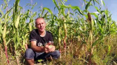 Successful Agriculturist in Front of His Corn Field — Stock Video