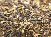 玄米 — ストック写真