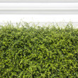 Bushes fence leaves green — Stock Photo #54515535