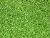 Grüner rasen — Stockfoto