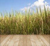 I campi di risaia in autunno — Foto Stock