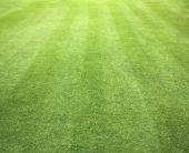 Campos de golfe verde gramado — Fotografia Stock
