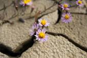 Small flowers growing on the cracked ground — Stock Photo