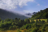 Misty morning on the hill — Stock Photo
