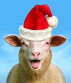 Christmas sheep — Stock Photo