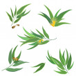Vector collection of eucalyptus leaves, flowers and seeds — Stock Vector #75168291