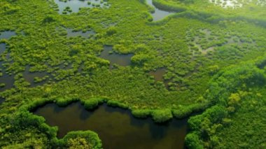 Brown waters within the mangrove — Vídeo de Stock