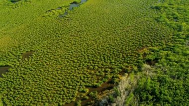 Brown waters within the mangrove — Vidéo