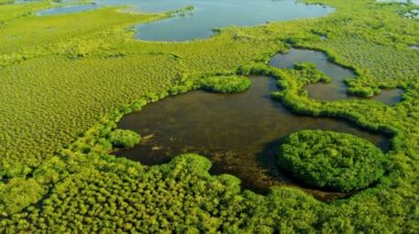 Brown waters within the mangrove — Vídeo Stock