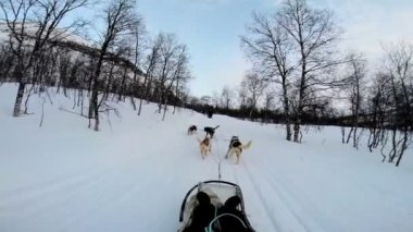 Dogsledding strong animal team working — Vidéo