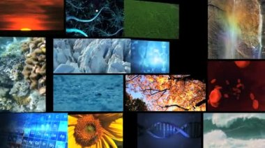 Video wall montage of nature environmental — Stock Video