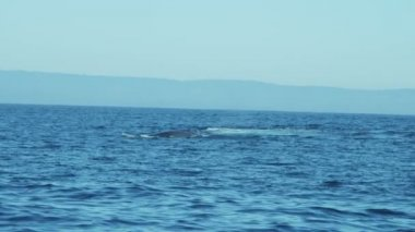 Humpback whale tail fluke, California Monterey, Pacific Ocean — Stock Video