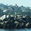 California Sea lions on rocks animal, Monterey Harbour, California, USA — Stock Video #58451509