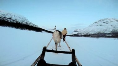 Reindeer pulling tourists in sledge — Stock Video