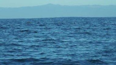 Colony Sea lions swimming Monterey coastal, Pacific coast, California, USA — Stock Video