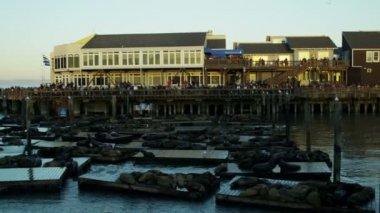 California Sea lions Pier 39 tourist San Francisco Bay, Pacific Ocean, USA — Stock Video