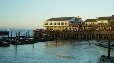 California Sea lions Pier 39 San Francisco Bay, Pacific Ocean, USA — Stock Video