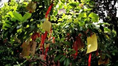 Tree Paper Religious Prayers — Stock Video