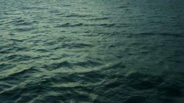 Sea trade International worldwide transportation fishing, USA — Stock Video