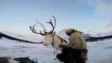 Norwegian Handler and White Reindeer — Stock Video