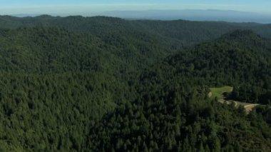 Land trees forest fir hills nature daylight — Vídeo de Stock