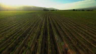 Agricultural Landscape and farmland crops — Stock Video