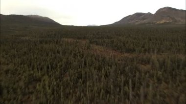 Aerial Alaskan National Park Landscape — Stockvideo