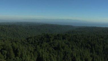 California  land forest fir hills nature daylight — Vídeo de Stock