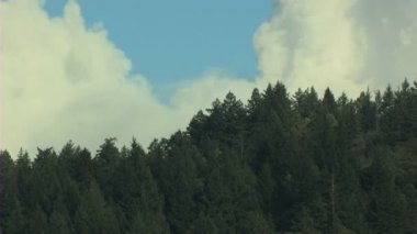 California USA trees forest hills nature daylight — Vídeo de Stock