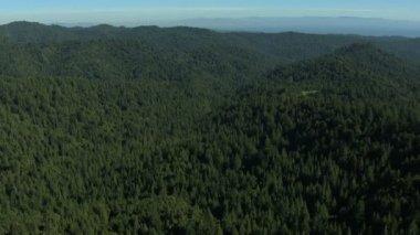Aerial California land trees forest fir hills nature daylight — Vídeo de Stock