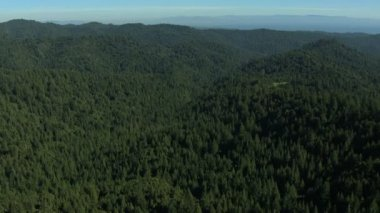 Aerial California land trees forest fir hills nature daylight — Stock Video