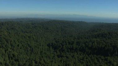 California USA land forest fir hills nature daylight — Stock Video