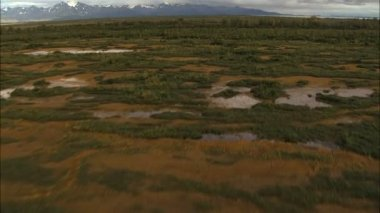 Alaska National Park swamp tundra — Stock Video