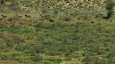 Herd of wild horses — Stock Video