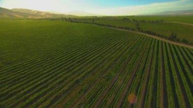 Fields of farming crops — Stock Video