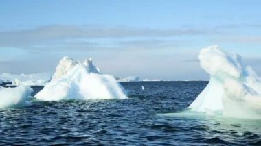 Ilulissat Disko Bay Coastal Melting Icebergs — Stock Video