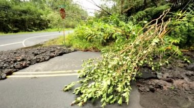 Island devastation aftermath Hurricane Iselle — Stock Video